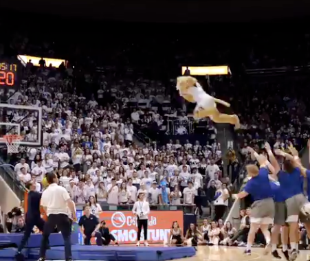 Cosmo the Cougar's Stunt Helps BYU Goes Viral, Again!
